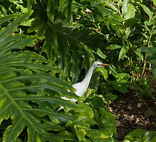 Hawaiian Garden Visitor - a Bright White Egret in the Lush Greenery by Georgia Mizuleva