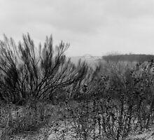 Texas Thundersleet over Lake Lewisville by Henri Bersoux