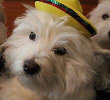 Cinco de Mayo Westie by smithmansell