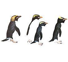 Penguin Group Photographic Print