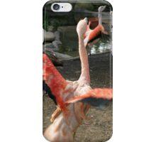 Chilean Flamingo iPhone Case/Skin