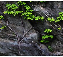 Vine and Stone, Tennessee Roadside by Rogere0829