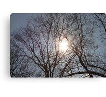 Sun Shining Through Trees Canvas Print