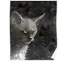 White Cat in Greys Poster