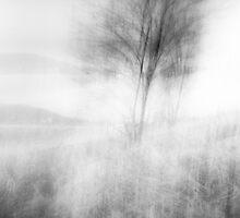 when the wind woke by Dorit Fuhg
