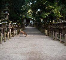 Kasuga Taisha Lanterns by photoeverywhere
