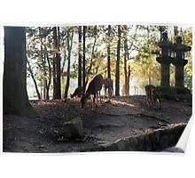 Wild Nara Deer Poster
