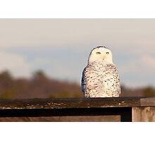 Snowy Owl watercolor art Photographic Print