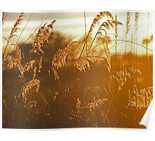 Okavango Sunrise Poster