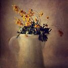 Dead daisies by Tam  Locke
