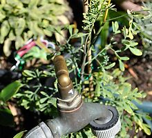 Herbs And Tap. by Raymond J. Marcon