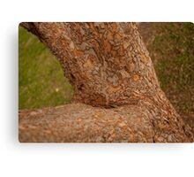 Branches Over Grass. Canvas Print