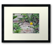 ©NS In Yellow IA Framed Print
