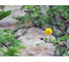 ©NS In Yellow IA Photographic Print