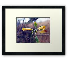 ©NS Yellow Bells IA Framed Print
