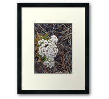 ©NS White Sparks IA Framed Print