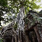 Ta Prohm  by Sam  Parsons