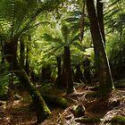 Dance of The Tree Ferns _  Mount Field National Park by Barbara Burkhardt