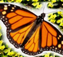 Susie is an expert in the Monarch Butterfly by legacyofhope
