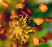 Flower 1 by elspiko