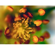 Flower 1 Photographic Print