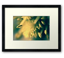 Flower3 Framed Print