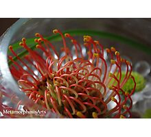Flower in a glass bowl Photographic Print