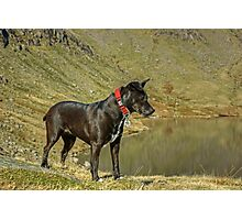 Tarn The Terrier Photographic Print