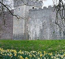 Daffodils in the garden at Cardiff Castle by photoeverywhere