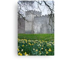 Daffodils in the garden at Cardiff Castle Canvas Print
