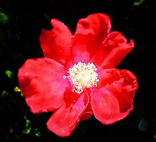 Wild Rose in Summer by LightDivineArt