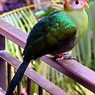 A thingy bird. by Martin Kirkwood (photos)