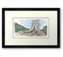 Old Marcus Stump Framed Print