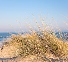 Sand dunes at Mudeford Sandbank, Christchurch, UK by Zoe Power