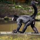 Colombian Spider Monkey by rosepetal2012
