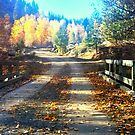 Fall Bridge in the Country by Jessie Miller/Lehto