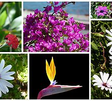 Collage of Flowers from Madeira by Lynn Bolt