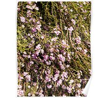 Pink Flowers & beez Poster