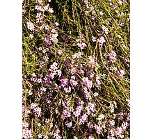 Pink Flowers & beez Photographic Print