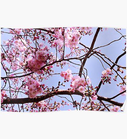 Pink, Blue & Spring Poster