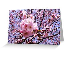 Cherry Blossoms & Blue Sky Greeting Card