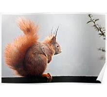 Red Squirrel. Poster