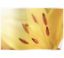 Sunshine Lily Poster