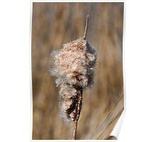Bullrush Seeds... Poster