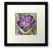 Purple Pearl Framed Print