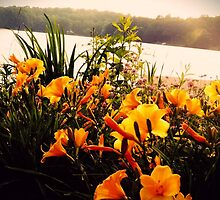 Yellow Flowers at the Lake by MadVonD