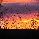 Sunrise, Sunset in Arizona by AuntieBarbie