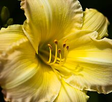 Lilly Detail I by Roger Passman