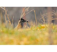 My Feathered Friend Photographic Print