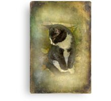 Tuxedo Cat Wearing Spats Canvas Print